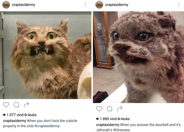 Kringloopkunst katten go with the vlo