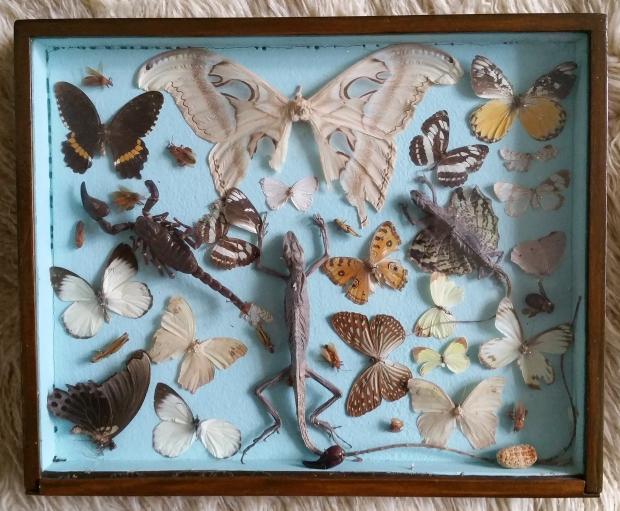 kringloop-schiedam-vlinders-kastje-go-with-the-vlo