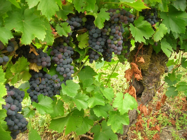 ribeira-sacra-wijn-huis-go-with-the-vlo