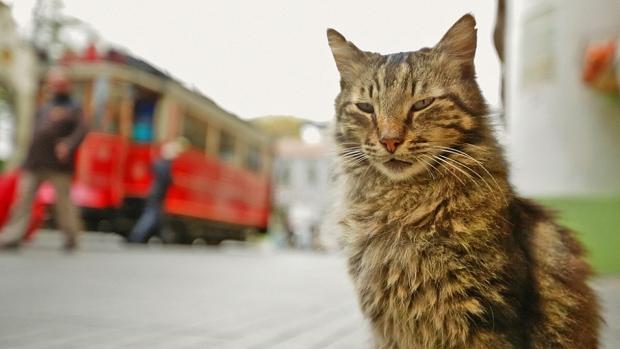 kedi-istanbul-tram-istiklal-caddesi-go-with-the-vlo