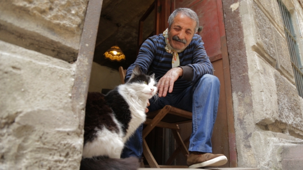 kedi-katten-film-istanbul-turkije-go-with-the-vlo