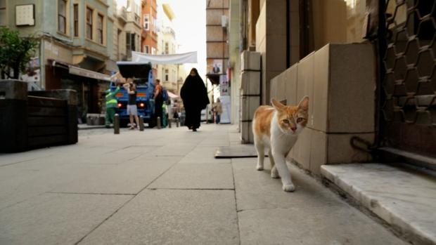 kedi-katten-istanbul-turks-go-with-the-vlo