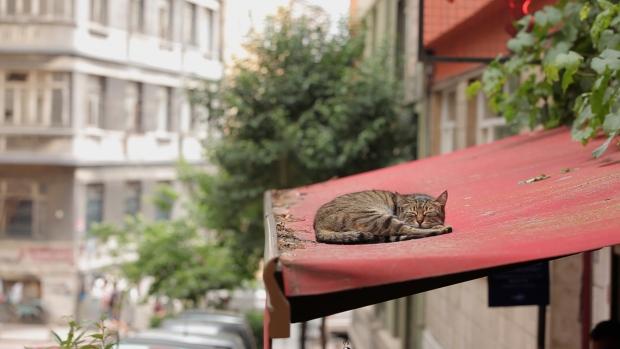 kedi-slapende-kat-istanbul-go-with-the-vlo