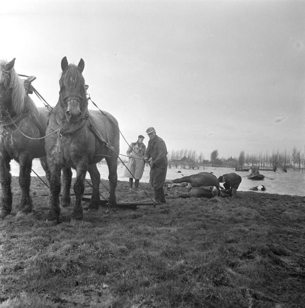 watersnoodramp-1953-zierikzee-kadavers-nationaal-archief-go-with-the-vlo