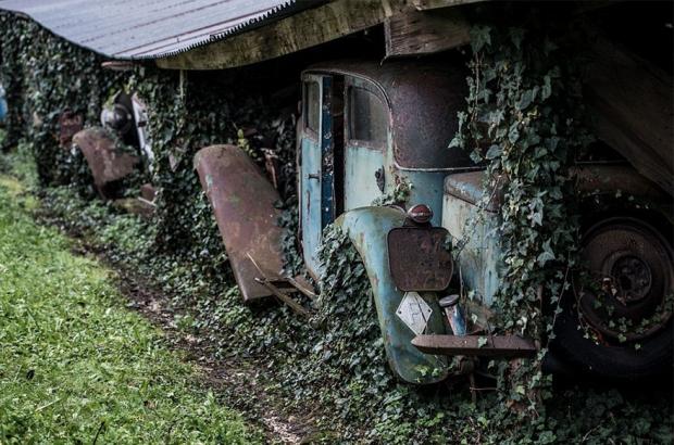 Klimop oude auto's