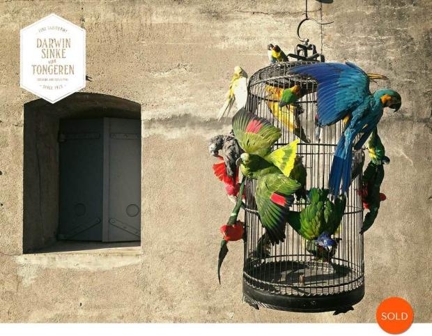 Macaw-Cage-DSVT