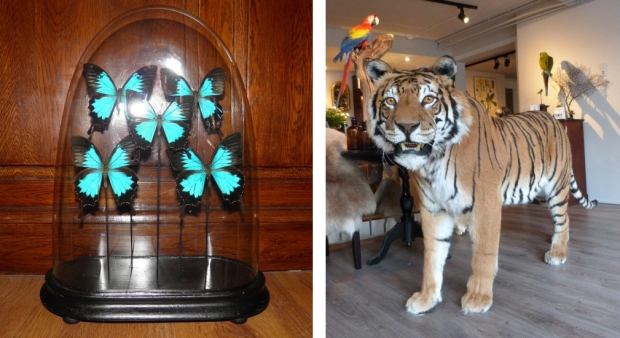 Museumwinkel Nijmegen tijger vlinders