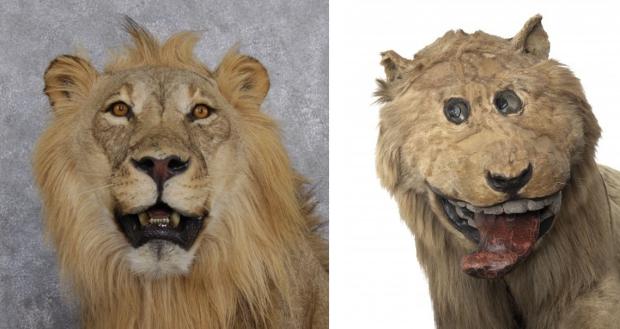Opgezette leeuw mislukt