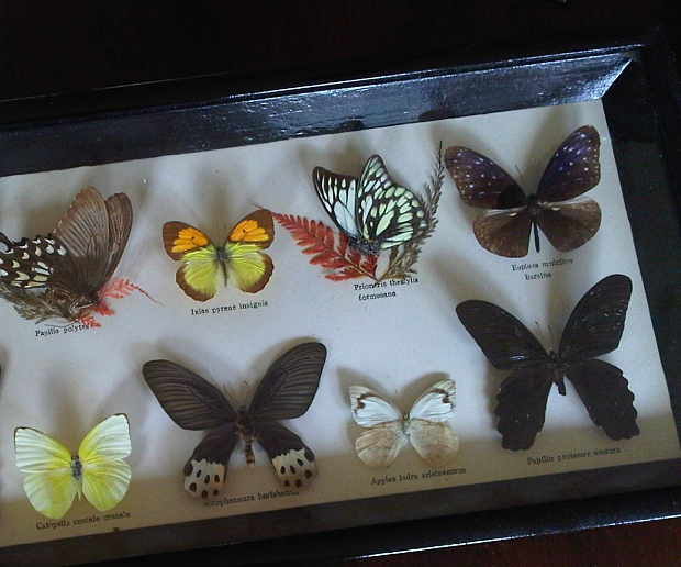 Vlinders rommelmarkt