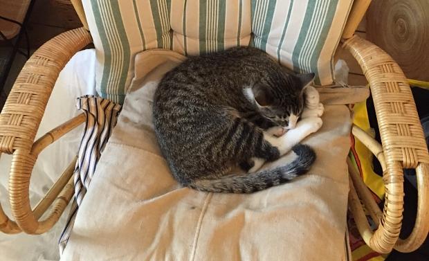 Huisontruiming slapende kat