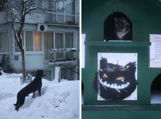 Istanbul sneeuw hond en kat copyright Danny Post
