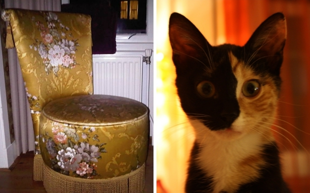 boudoirstoel-poes-zubis-go-with-the-vlo