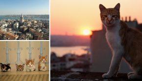 istanbul-kedi-straatkatten-film-go-with-the-vlo