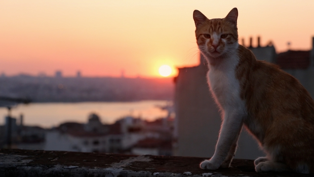 kedi-film-istanbul-turkije-go-with-the-vlo