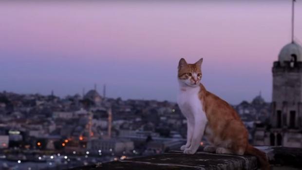 kedi-istanbul-daken-katten-film-go-with-the-vlo