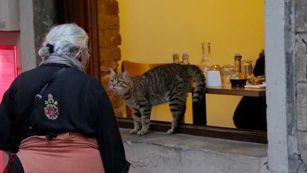 kedi-istanbul-katten-film-vrouw-go-with-the-vlo