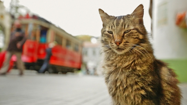 kedi-istanbul-tram-istiklal-caddesi-go-with-the-vlo