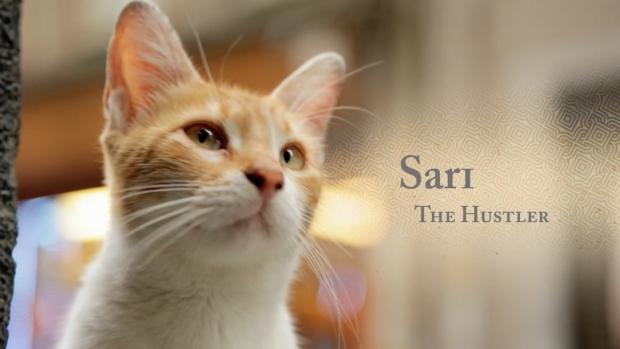 kedi-katten-istanbul-sari-hustler-go-with-the-vlo