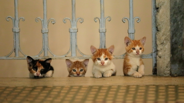 kedi-kittens-film-istanbul-go-with-the-vlo
