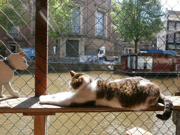 poezenboot-kattenopvang-amsterdam-go-with-the-vlo