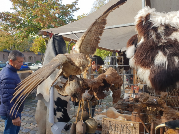 Brocantemarkt Heusden taxidermie roofvogels go with the vlo 2