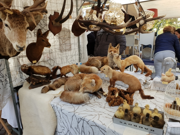 Taxidermie kuikens vossen brocantemarkt Heusden go with the vlo