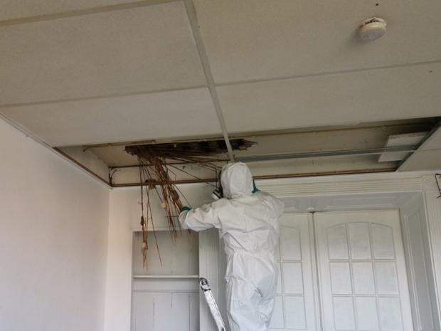 Lijkvocht plafond schoonmaken Frisse Kater go with the vlo